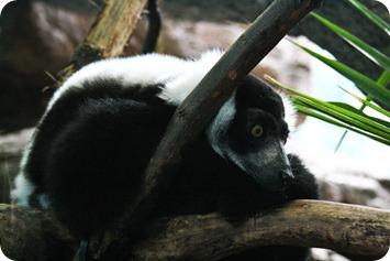 zoo (11 of 38)