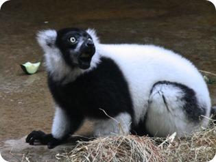 zoo (15 of 38)