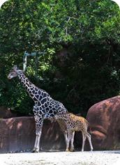 zoo (22 of 38)