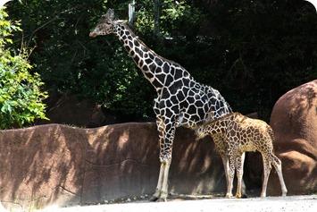 zoo (23 of 38)