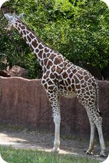 zoo (24 of 38)