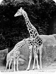zoo (25 of 38)