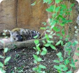 zoo (37 of 38)