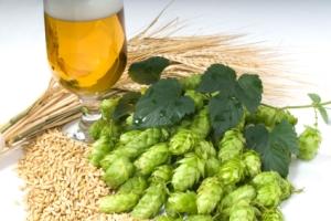 Sweet nectar of the gods: a.k.a. hops.